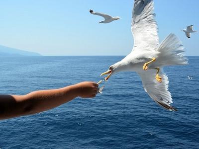 Птицы на отдыхе с детьми в Греции
