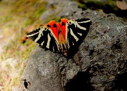 Природный заповедник Родоса - Долина бабочек
