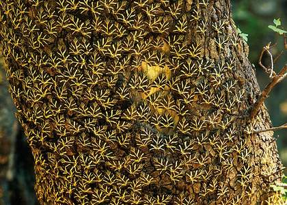 Достопримечательности Родоса - Долина бабочек