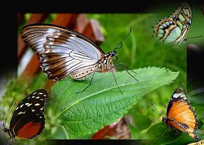Развлечения в Дом бабочек в Милано Мариттима: Дом бабочек