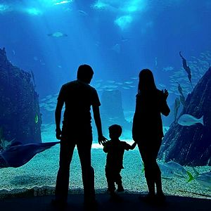Океанариум в Парке развлечений Ольтремаре