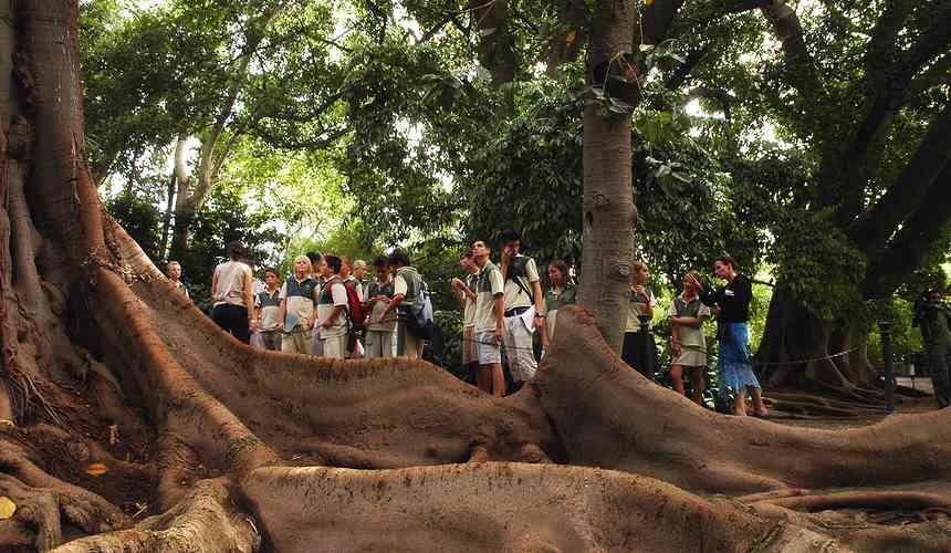 Малага: ботанический сад