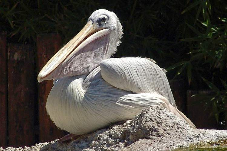 Аквапаркк Marineland