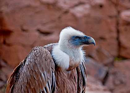 Las Aguilas del Teide