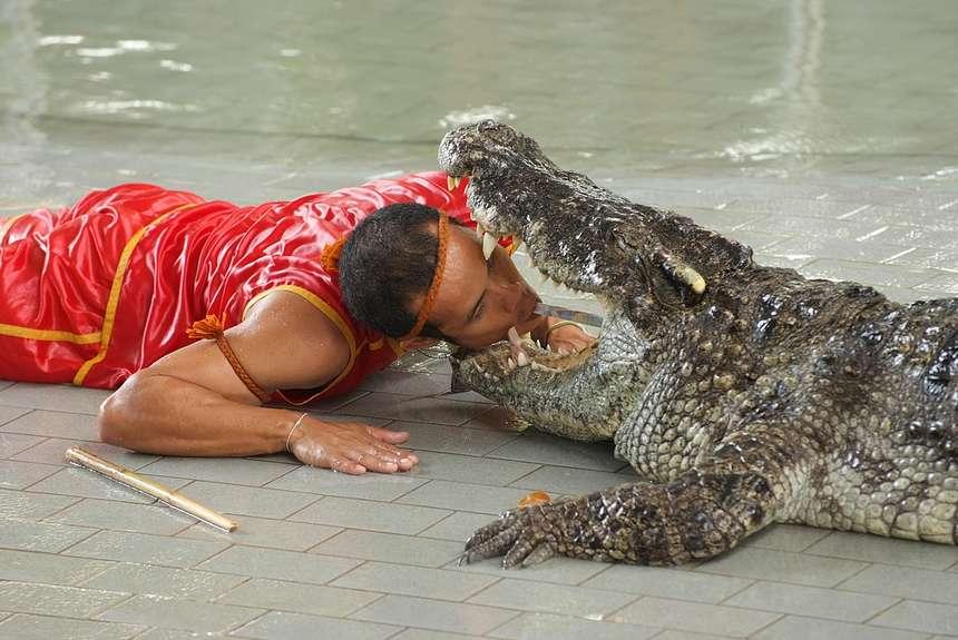 опасные для жизни тайские представления с крокодилами