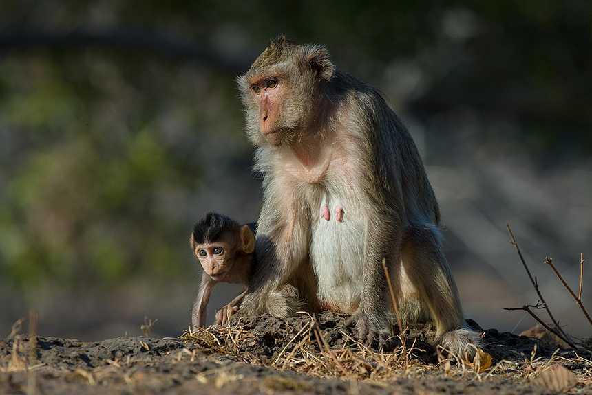 Шоу с обезьянами в Таиланде