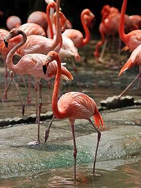 Зоопарк Khao Kheow в Паттайе