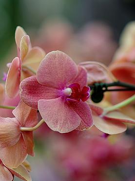 Посмотреть в Паттайе сад Нонг Нуч