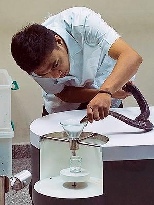 Змеиная медицина в Таиланде