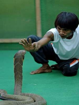 Погода в Паттайе в ноябре и шоу с кобрами