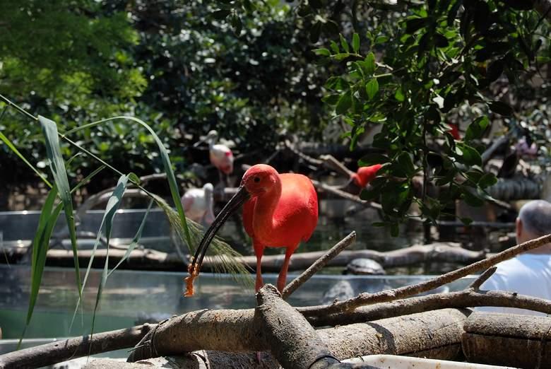 птицы в океанариуме Валенсии