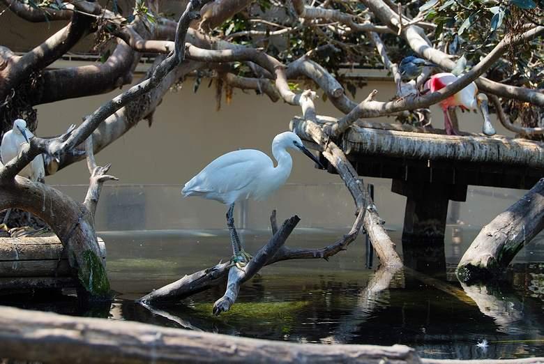 птицы в павильоне Wetlands