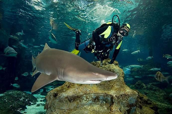 развлечения в океанариуме барселоны