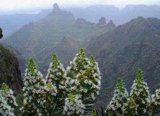 Обзор погоды на Канарских островах по месяцам
