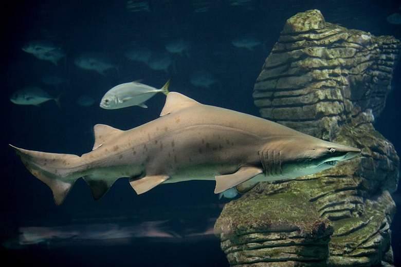 valencia oceanografic shark