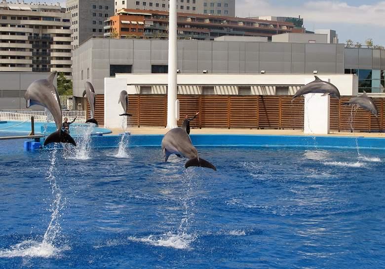 дельфинарий в Валенсии