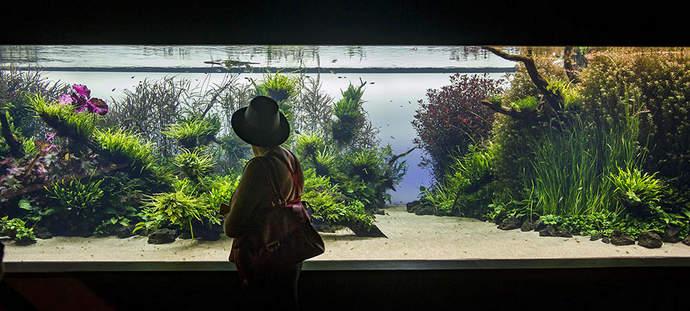 ноавя выставка в океанариуме валенсии