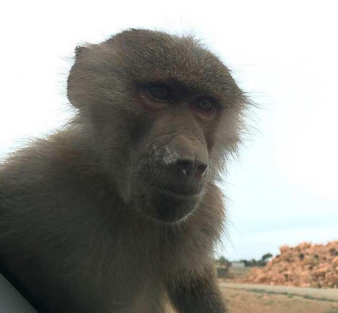 зоопарк сафари майорка